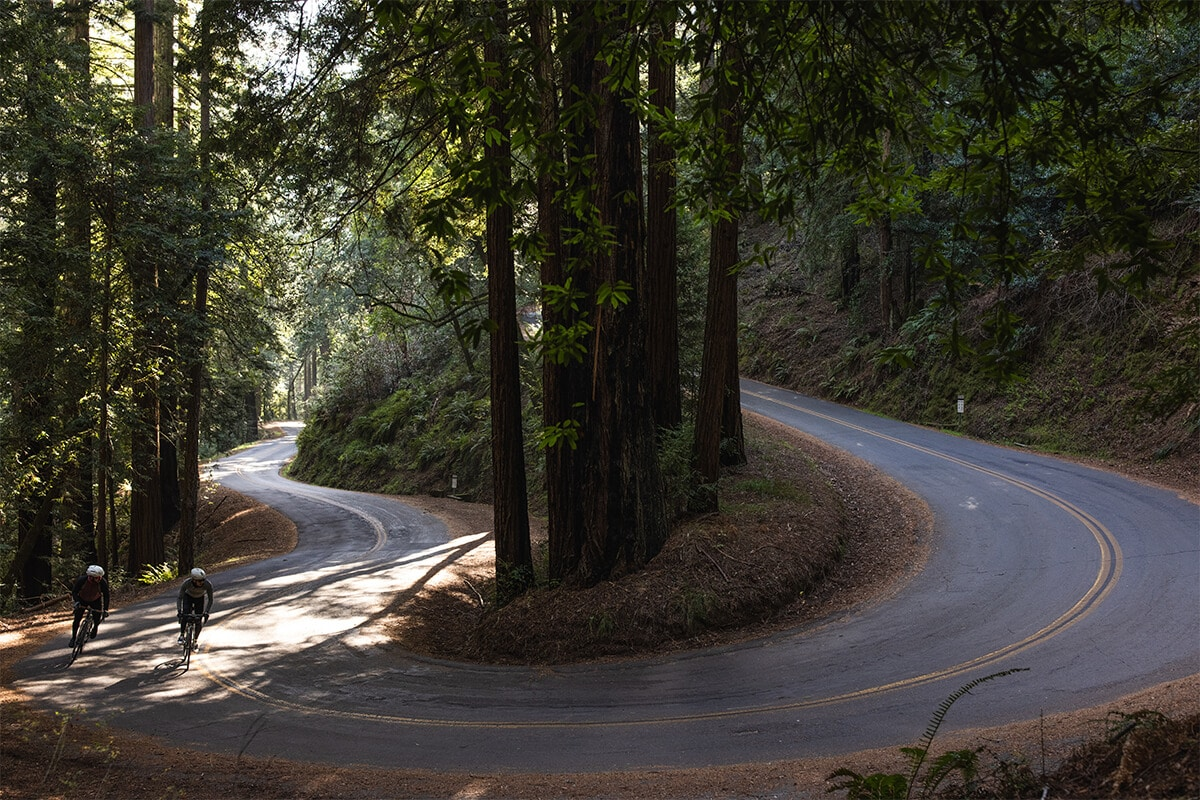 Road Cycling through CA Redwoods